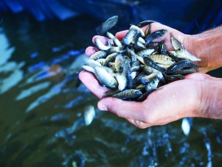 Relatório Anual de Produção da Aquicultura em Águas da União deve ser enviado até 31 de março