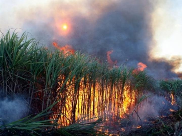 Quitação de débitos por queima da palha da cana