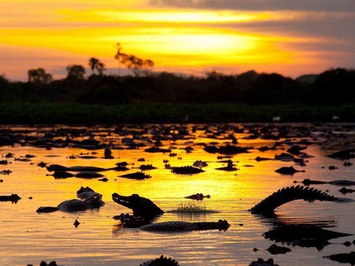 Sebrae e Ministério da Agricultura se unem pela recuperação do Pantanal