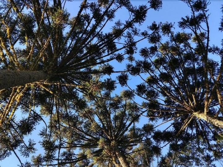 Florestas Nacionais e armazéns da Conab são qualificados no PPI