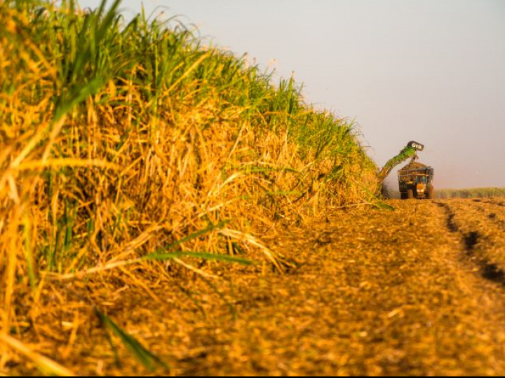 Raízen amplia parceria com Santander para acesso de produtores a crédito rural
