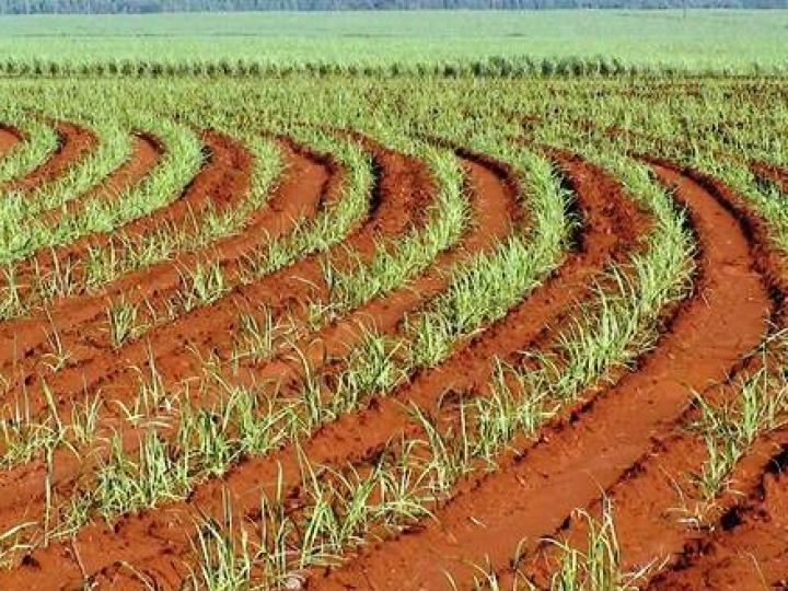 Pesquisa paulista explica como a produtividade de cana varia no mesmo tipo de solo