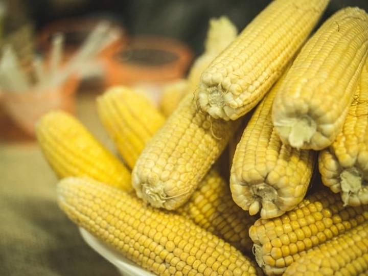 Pioneer® lança híbridos de milho com a tecnologia Optimum AQUAmax™