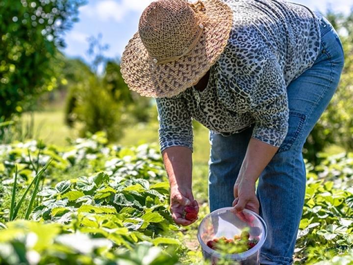 Publicada relação de produtos da agricultura familiar com bônus em maio