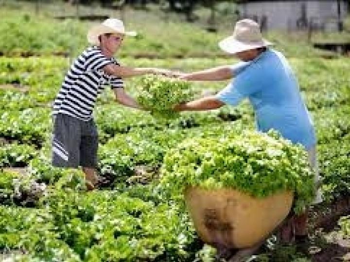 Garantia-Safra autoriza pagamento para mais de 44 mil agricultores familiares