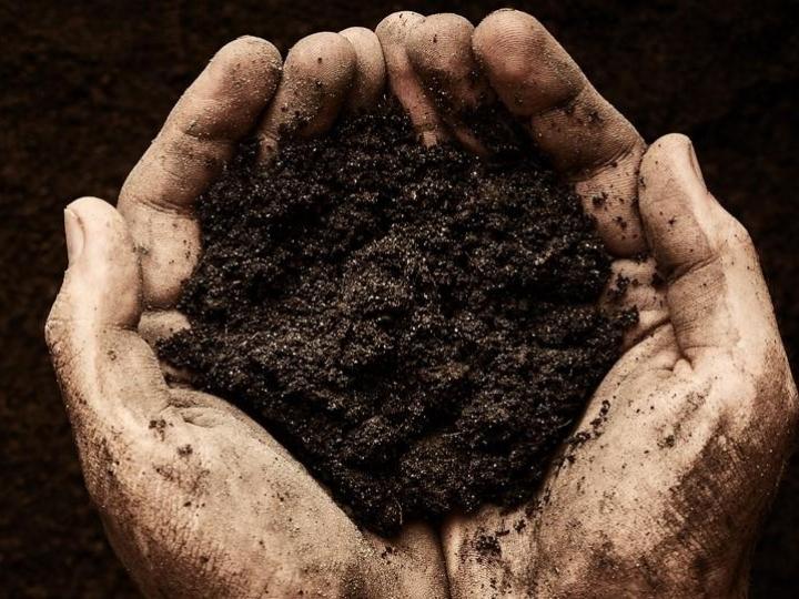 Bayer anuncia nova fase da iniciativa Carbono com benefícios para agricultores