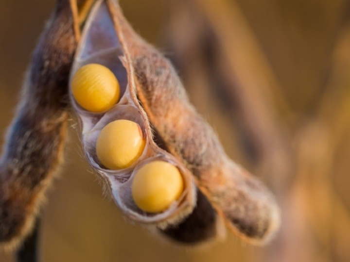 Corteva Agriscience leva inovação à cultura da soja