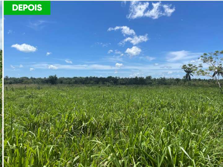 Corteva Agriscience lança tecnologia para controle de plantas daninhas em pastagem alinhada à pecuária sustentável