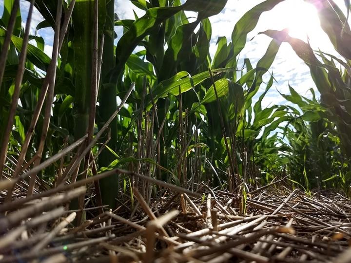 Redução de minhocas compromete a fertilidade em áreas sob plantio direto