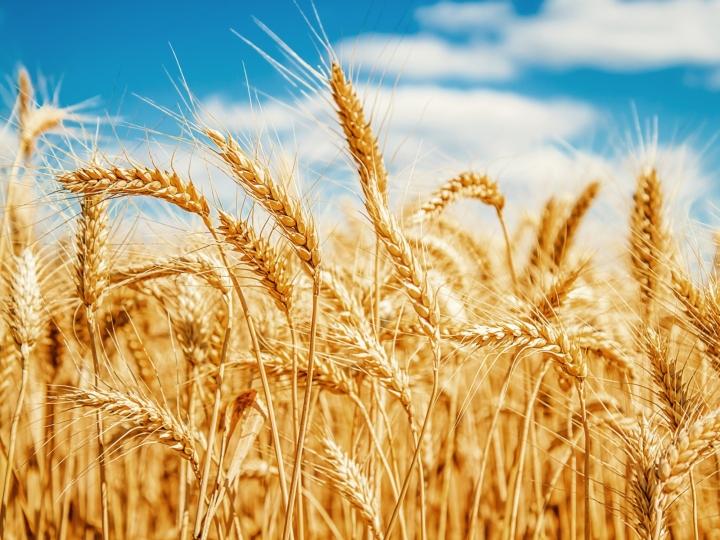Bunge retoma moagem de trigo em Brasília
