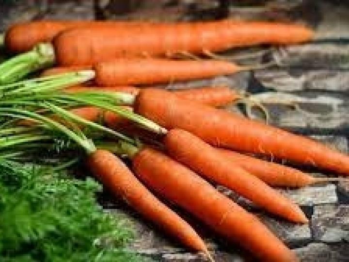 Oferta de cenoura e de cebola no atacado reflete em queda de preços