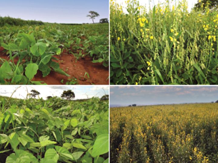 Contribuições agroecológicas de feijão em sistema de produção e práticas de manejo