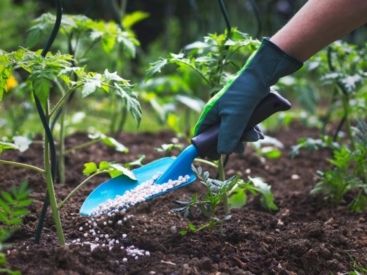 A importância da aplicação do fertilizante orgânico em diferentes culturas