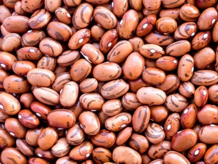 Manejo com biológicos incrementa até 7 sacas de feijão
