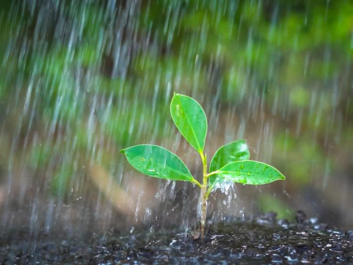 Chuvas avançam e chegam com intensidade no Paraná e MS nesta quarta