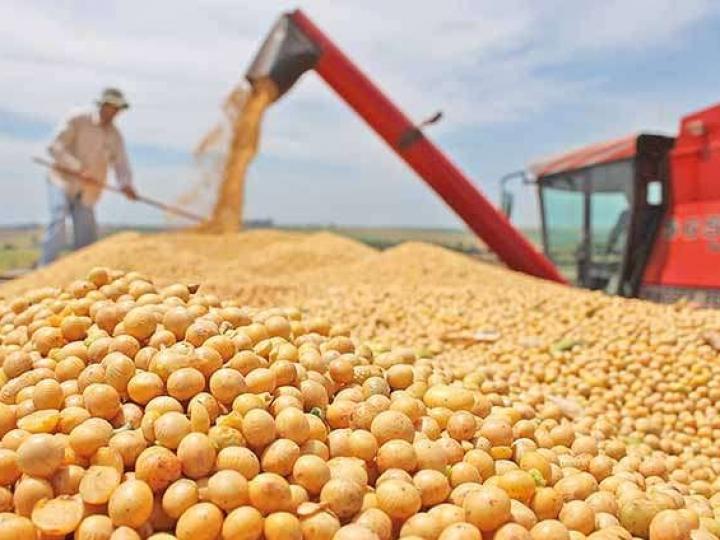 ABIOVE prevê encolhimento da indústria da soja em 2021