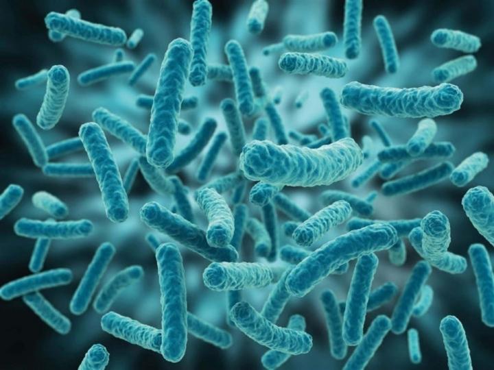 Ital oferece bolsa de pós-doutorado em Biotecnologia com foco em bactérias láticas