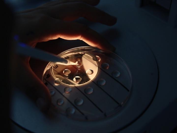Projeto aumenta acesso de pequenos produtores à tecnologia de embriões