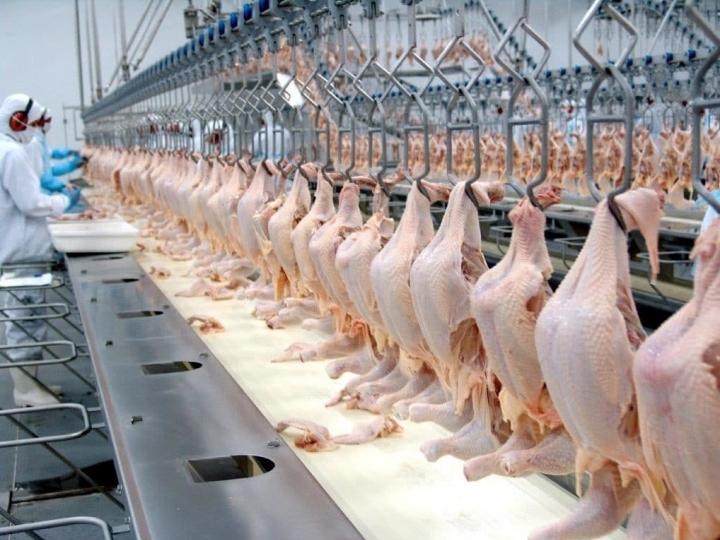 Frango halal atinge marca de quase 800 mil toneladas embarcadas nos primeiros cinco meses do ano
