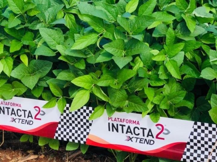 Bayer lança Intacta 2 Xtend®️, nova geração de soja que irá revolucionar o potencial produtivo do Brasil