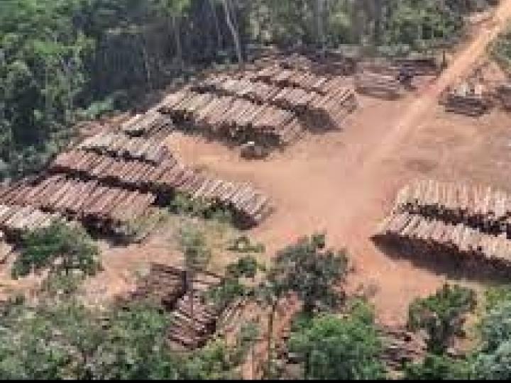 Máquina de classificação de madeira criada pelo Serviço Florestal Brasileiro recebe patente