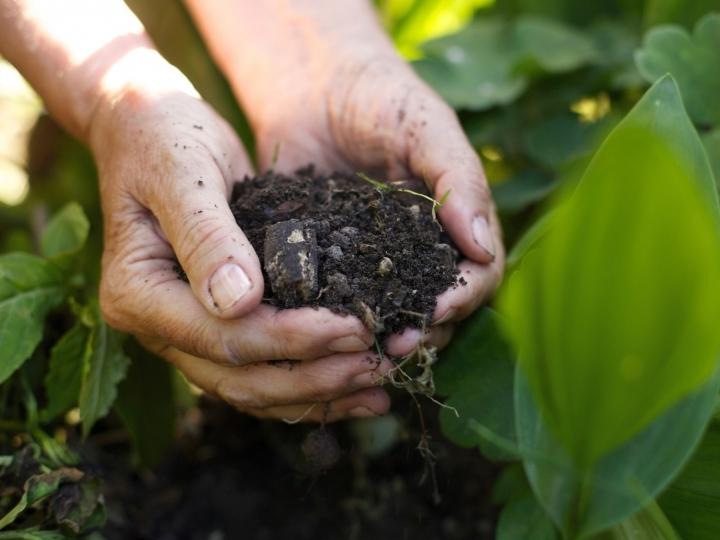 Como aplicar o fertilizante orgânico nas diferentes culturas?