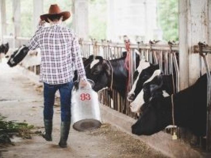 É possível fazer a contagem bacteriana total do colostro e do leite do tanque da fazenda?