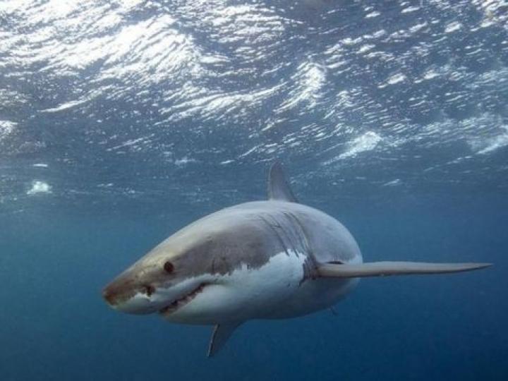 Pesquisas com tubarões e raias em cativeiro