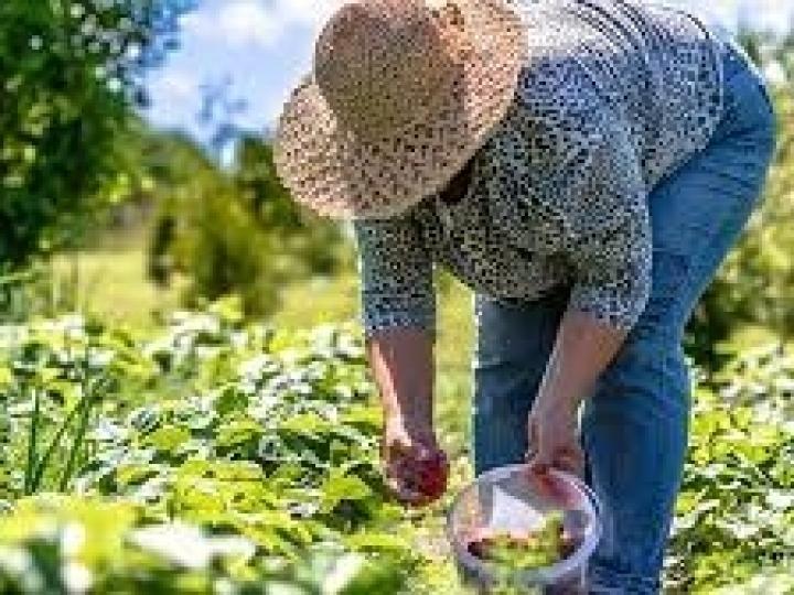Boletim com cenários e perspectivas para agricultura familiar