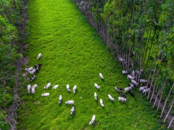Sociedade civil pode participar de consulta pública sobre plano para agricultura de baixo carbono