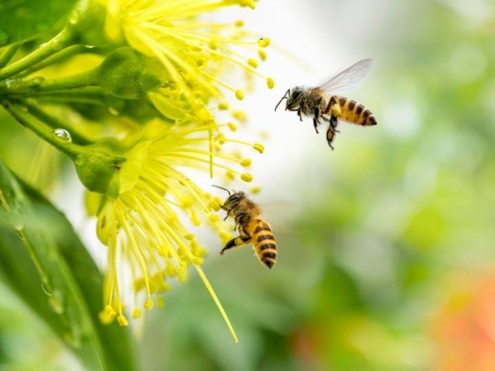 Polinização aumenta produção agrícola, mas depende de áreas de vegetação natural