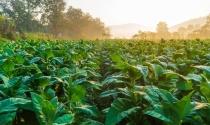 Uso de tecnologia de ponta impulsiona o bom momento da agricultura