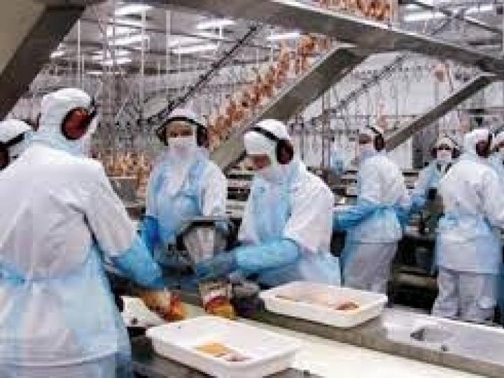 Geração de empregos na produção de alimentos de janeiro a julho tem melhor resultado desde 2011