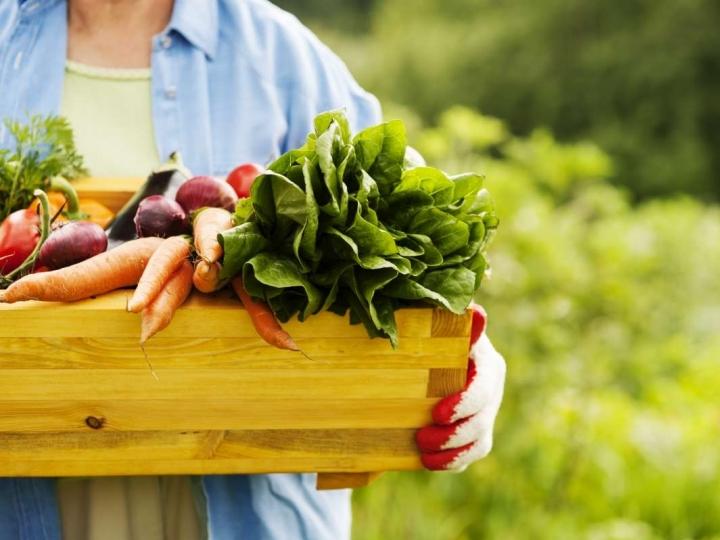 Alimentação em casa aumenta busca por orgânicos