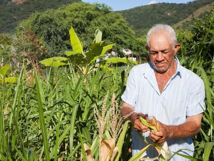 Congresso aprova auxílio emergencial à agricultura familiar, que depende de sanção presidencial