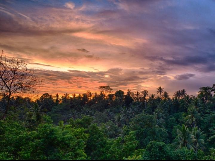 Mercado de carbono, financiamentos e Amazônia  serão prioridades do Brasil na COP-26