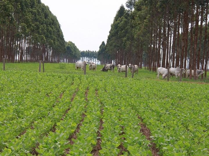 Sistemas ILPF têm menores perdas de solo, água e nutrientes