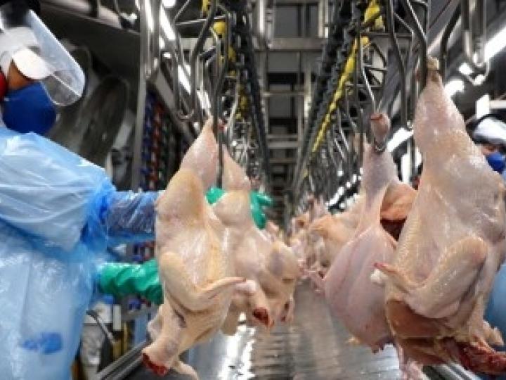 Japão abre mercado para o material genético avícola do Brasil