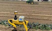 Robôs portáteis caminham pelas lavouras