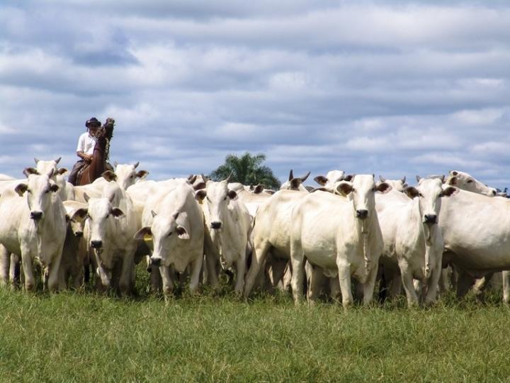 Soja, milho e carne bovina puxam VBP, que supera R$ 1,1 tri