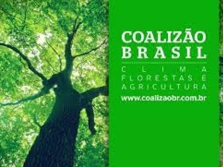 Coalizão Brasil Clima, Florestas e Agricultura defende a criação de uma política nacional de Bioeconomia