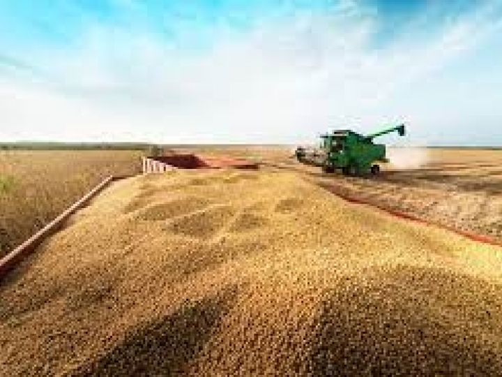 Produção estadual de grãos fecha o ciclo com estimativa de 8,6 milhões de toneladas