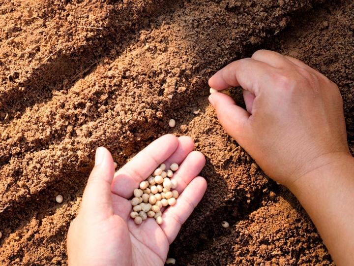 Calendários de semeadura de soja passam a ser obrigatórios para 20 estados
