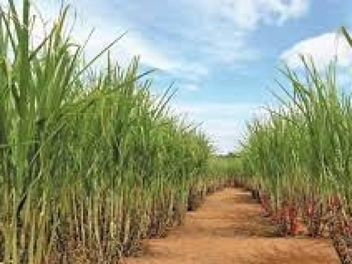Academia de Sucessão no Agronegócio apoia as próximas gerações de produtores de cana