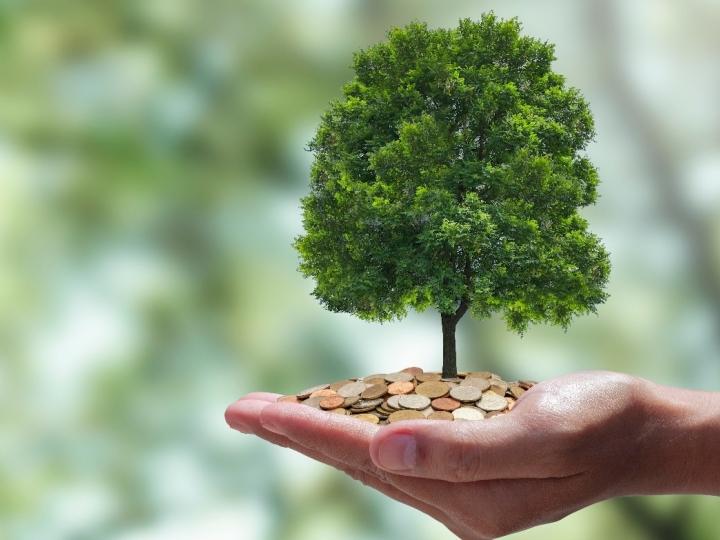 Indústria pode se desenvolver de maneira sustentável  por meio da biodiversidade e mercado de carbono