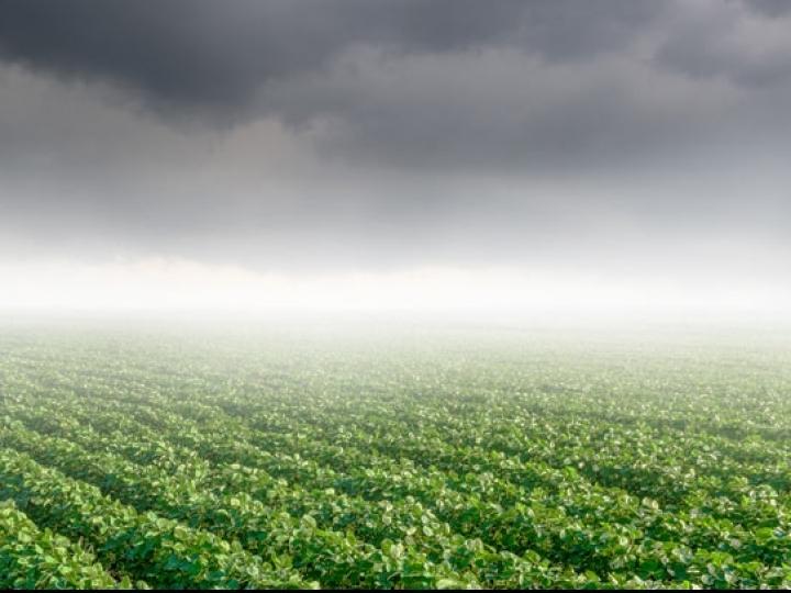 Monitoramento das lavouras indica pouco volume de chuvas
