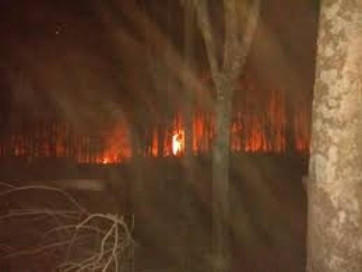 Pesquisadores da APTA Regional orientam para prevenção de incêndios em seringais