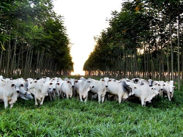 Amazônia pode produzir mais carne sem desmatar e gastando menos, mostra estudo