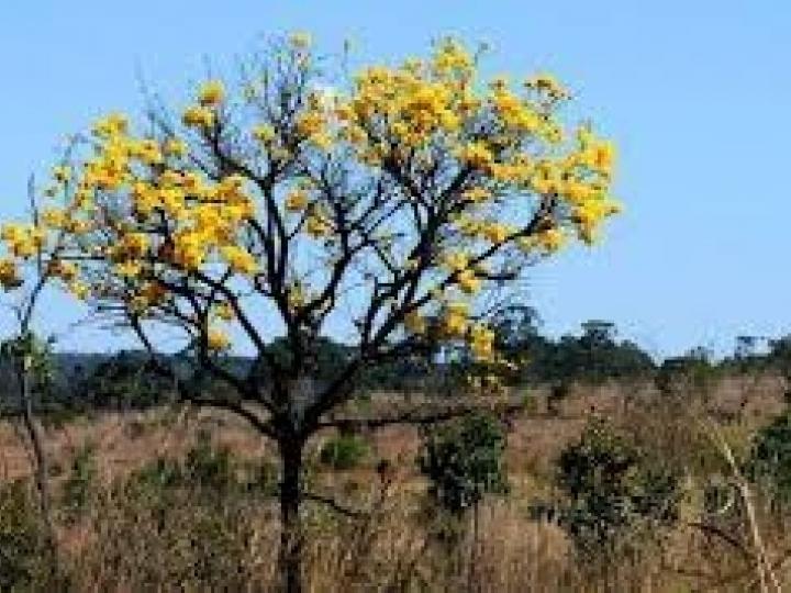 Agricultura cresce 460% no Cerrado desde 1985 e ocupa área maior que o Paraná