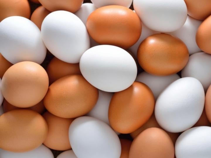 Exportações de ovos crescem 137,7% em 2021
